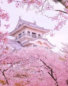 Cherry blossom on the ancient japanese castle - Petra Schwarz - Pin To Travel Aesthetic Japan, Japanese Aesthetic, Travel Aesthetic, Cherry Blossom Japan, Japanese Cherry Blossoms, Japanese Blossom, Japanese Geisha, Pink Blossom, Japanese Kimono