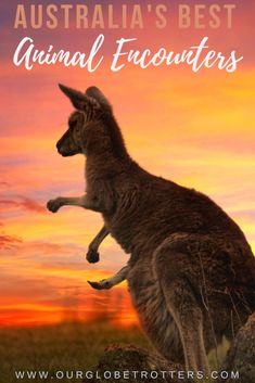 Where to meet Australia's wildlife. A guide to nature experiences, zoos and sanctuaries in every Australian state for the ultimate animal experiences Downunder #australia #familyvacation Australia Destinations, Australia Travel Guide, Amazing Destinations, Australia Beach, Visit Australia, Travel Guides, Travel Tips, Wildlife Tourism, Australian Photography
