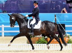 5-3-16. British Dressage Star Uthopia To Be Sold At Auction