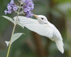 Albinismo: O branco que a natureza merece. Uma coleção com mais de 90 fotos de animais albinos