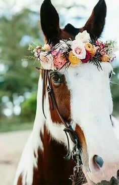 Pink Hawaii Beach Elopement - Pferde -Romantic Pink Hawaii Beach Elopement - Pferde - Romantic Pink Hawaii Beach Elopement - Inspired by This Fierté de Picasso Fine Art photographie cheval sauvage Cute Baby Animals, Farm Animals, Animals And Pets, Funny Animals, All The Pretty Horses, Beautiful Horses, Animals Beautiful, Beautiful Goddess, Beautiful Gorgeous