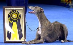 This article originally appeared on PEOPLE.com. Fast on her feet, gentle on the eyes and with a glowing personality to boot, Grand Champion Grand...