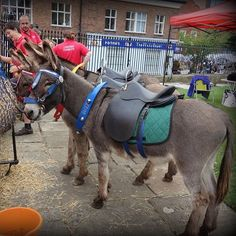 Instagram media by threeshires - Treacle Market. Donkey rides on offer in St Michael's churchyard in Macclesfield yesterday. Parking is free on Treacle Days and the town is packed. People flood in to visit the huge market and most of the town centre shops are open too. Maybe this is the way to relaunch shopping on the UK's high streets? Not a traffic warden in sight 😂 #treaclemarket #macclesfield #cheshire #donkeyrides #stmichaelschurchmacclesfield #ukhighstreet 🇬🇧 #localmarket #buzz…