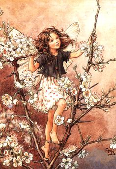 "Vintage print 'Blackthorn' by Cicely Mary Barker from ""Flower Fairies of the Winter""; with a biography of the author, Poems and Pictures by Cicely Mary Barker, Published by Blackie [Flower Fairies - Winter] Cicely Mary Barker, Fairy Paintings, Vintage Fairies, Beautiful Fairies, Beautiful Fantasy Art, Beautiful Images, Beautiful Things, Fantasy Illustration, Illustration Flower"