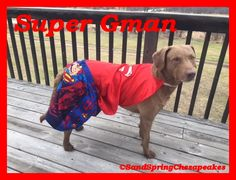 For all your Super Hero needs Gman is here for you! Wordless Wednesday is a community linkup of bloggers. Visit our host,BlogPaws,and you can use the icons below the post to hop from si…