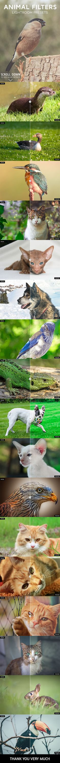 17 Animal Photography Lightroom Presets