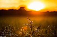 Last Sun... by sebastiankliemann #nature #mothernature #travel #traveling #vacation #visiting #trip #holiday #tourism #tourist #photooftheday #amazing #picoftheday