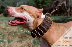 3 inch Wide Leather Dog Collar with 5 rows of polished brass spikes