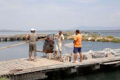 De vissers van de cooperatie halen hun visvallen leeg. Fish, Sports, Hs Sports, Pisces, Sport