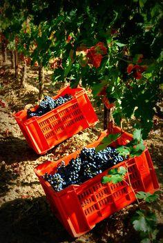 Petra Winery, Tuscany, Italy