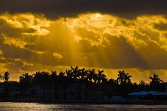 FtLauderdale golden rays