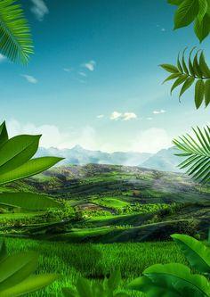Natural landscape board background Plant Wallpaper, Wallpaper Pc, Photography Studio Background, Art Photography, Nature Background Images, Poster Making, Photo Backgrounds, Photo Art, Cool Photos