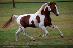 chestnut tobiano stallion 2 by venomxbaby.deviantart.com on @deviantART