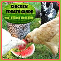 Chicken Treats Guide. Don't Love Your Pets to Death.