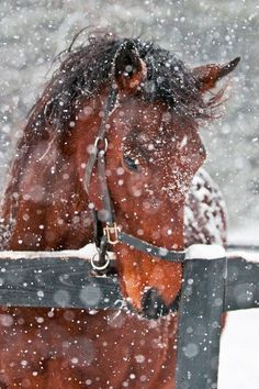 I would absolutely love to do a winter senior shoot with a gorgeous horse :)
