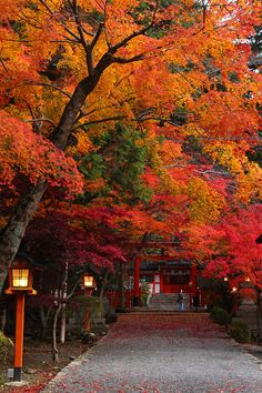 大原野神社(京都市西京区)Fall in Oharano Shrine, Kyoto, Japan