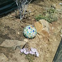 After seeing so many posts on diy garden globes, I just had to try it.…