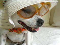 Patinhas de Grife: Viajar ou não com seu Pet? Nestetempo de férias, q...