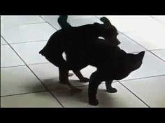 Perros completa historia de amor apareamiento