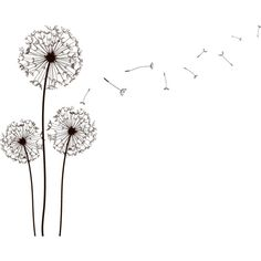 dandelion ❤ liked on Polyvore featuring fillers, backgrounds, flowers, drawings, doodles, effects, text, texture, quotes and details