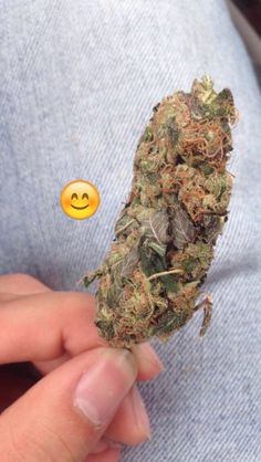 Buy High Grade Medical Marijuana   Weed For Sale   THC and CBD Oil For Sale   Edibles For Sale   Hemp Oil   Wax Oil   At Affordable Price Text / call +1 (908)485-7293 website: https: // www.legalcannabisshop.com
