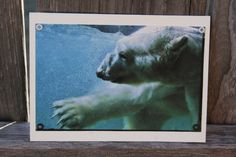 Polar Bear Plunge Blank Note Card Animal by HBBeanstalk on Etsy, $3.00