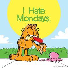 I hate Mondays, Garfield, funny cats, ice cream Garfield Monday, Garfield Quotes, Garfield Cartoon, Garfield And Odie, Garfield Comics, Monday Humor, Monday Quotes, Its Friday Quotes, Monday Monday