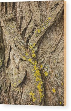 "Tree Bark Closeup - Natural Abstract Wood Print by Matthias Hauser. The image gets printed directly onto a sheet of 3/4"" thick maple wood. Wood prints are extremely durable and add a rustic feel to any image. Click through and enjoy the texture and depth of this artwork in your home."