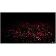 / Wandering signs  #花をながめて #昭和記念公園 #ポピー #シャーレーポピー #東京カメラ部 #花 #花の写真館 #ファインダー越しの私の世界 #はなまっぷ #IGersJP #team_jp_ #team_jp_flower #photooftheday #poppy #flowerstagram #500px #kf_gallery #loves_japan #flower #flowers #dreamyphoto #tokyocameraclub #floral_secrets #light_nikon #tv_flowers #flowermagic #flowerslovers #flowerpower #flowerstagram #d750 #9vaga_softflowers9 gelinshop.com/...