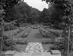 Brandywine Park rose garden.  1325-003-206 #2913.  Delaware Public Archives.  www.archives.delaware.gov