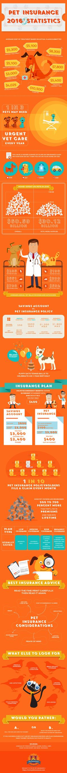 Find out everything you need to know about pet insurance using this infographic from Pet Insurance U. Updated with 2016 with facts, statistics, data and funny, adorable artwork of cats and dogs. Pet Insurance Reviews, Pet Health Insurance, Best Pet Insurance, Insurance Companies, Dog Food Online, Dog Information, Healthy Pets, Pet Life, Cat Health