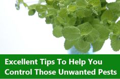 Excellent Tips To Help You Control Those Unwanted Pests. Sprinkle mint around affected areas if you have a mouse problem. This will get rid of most mouse problems; just remember to use fresh leaves.