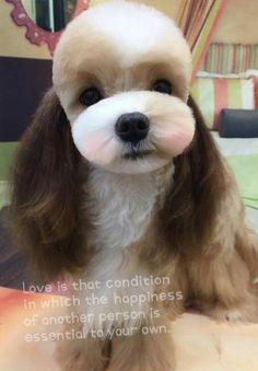 Peste 1000 de idei despre Animale De Companie pe Pinterest   Pit ...