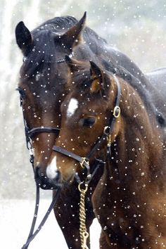 - Pferdefreunde Horses our friends - Animal world Most Beautiful Animals, Beautiful Horses, Beautiful Creatures, Beautiful Boys, Baby Horses, Wild Horses, Horse Pictures, Animal Pictures, Animals And Pets