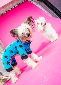 Diva und Gent Dogfashion: Fotoshooting