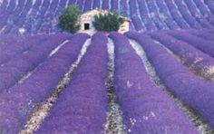 Associazione Campalto Viva Iniziative per campalto... Venzone, Italia