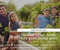 Home Grown Vegetables, Organic Seeds, Innovation, Encouragement, Herbs, Natural, Green, Herb, Nature