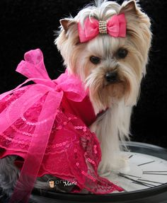 Sassy in Pink ready for a late night pawty!
