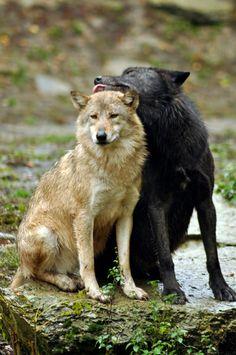 "her-wolf: "" // By Ulrich Mairon """