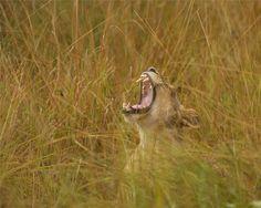Taking a #Zambia Safari during 'Secret Season'