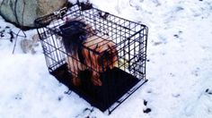 Rescued Dog Was Abandoned in Crate in Snow