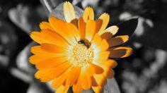 Flowers Vintage Orange