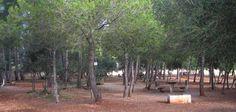 Pasa el día en las áreas recreativas de Mallorca