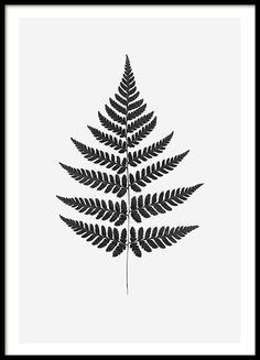 Black and white posters | Botanical prints for fashionable decor
