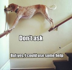Funny photos, funny dog, dog needs help on stairs