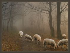 Sheep in the mist! Sheep Farm, Sheep And Lamb, Farm Animals, Animals And Pets, Cute Animals, Sheep Paintings, Animal Paintings, Beautiful Sky, Animals Beautiful