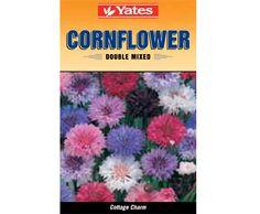 Yates Cornflower