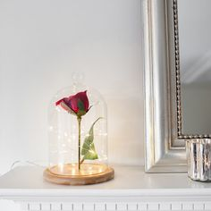 Create a magical enchanted rose bell jar with our glass dome and sparkly fairy lights! Enchanted Rose, Glass Domes, Glass Jars, Bell Rose, Rose In A Glass, Lighted Centerpieces, Personalized Valentine's Day Gifts, The Bell Jar, Bell Jars