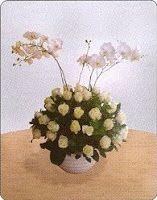 Roses - Beautiful and Fresh - Florist Jakarta - Online Flower Shop :: Hotline 021-60503980, 021-94229037, Pin BB: 320F2810