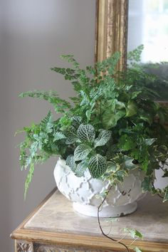 Carmen Johnston Gardens:28 Container Gardens for Spring: Day 28 - Carmen Johnston Gardens 1. Maiden Hair Fern 2. Mother Fern 3. Fittonia 4. Ivy 1. Create texture by placing the tallest plants in the back. 2. Then gradually create layers by adding the shorter plants in the front. 2. Use fittonia and ivy to soften the edges.